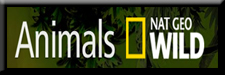 Nat Geo Wild Animals